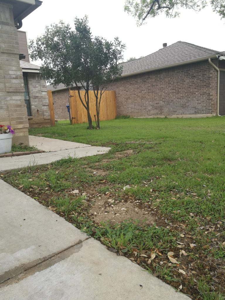 Lawn to the right of the driveway, March 2020