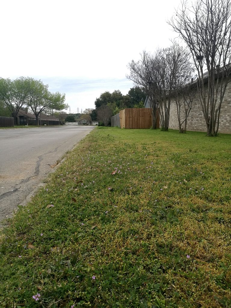 Side yard full of clover and chickweed, March 2020