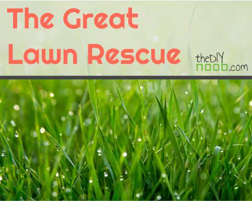 The Great Lawn Rescue: Weed control update